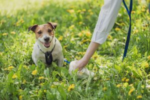 pick up dog waste