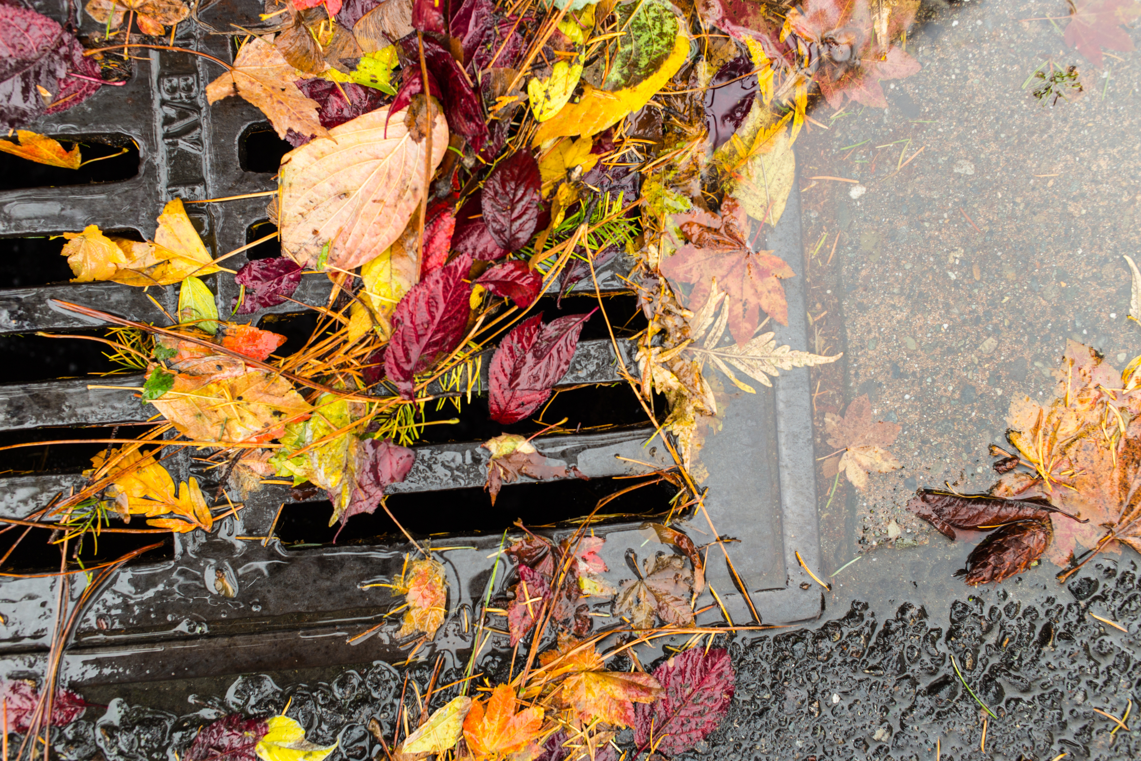 Yard Waste: Proper Disposal is Important - Neponset ...